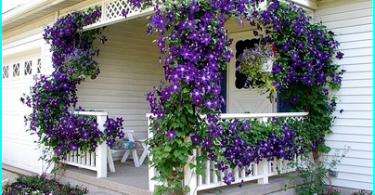 Bartrær for Gardens: hagen med bartrær
