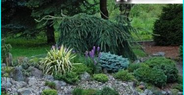Juniper: planting og vedlikehold regler, valg av varianter